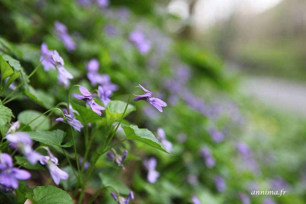 fleurs27