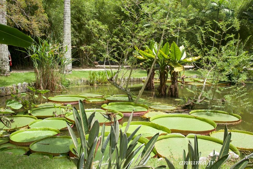 jardin-botanique-rio12