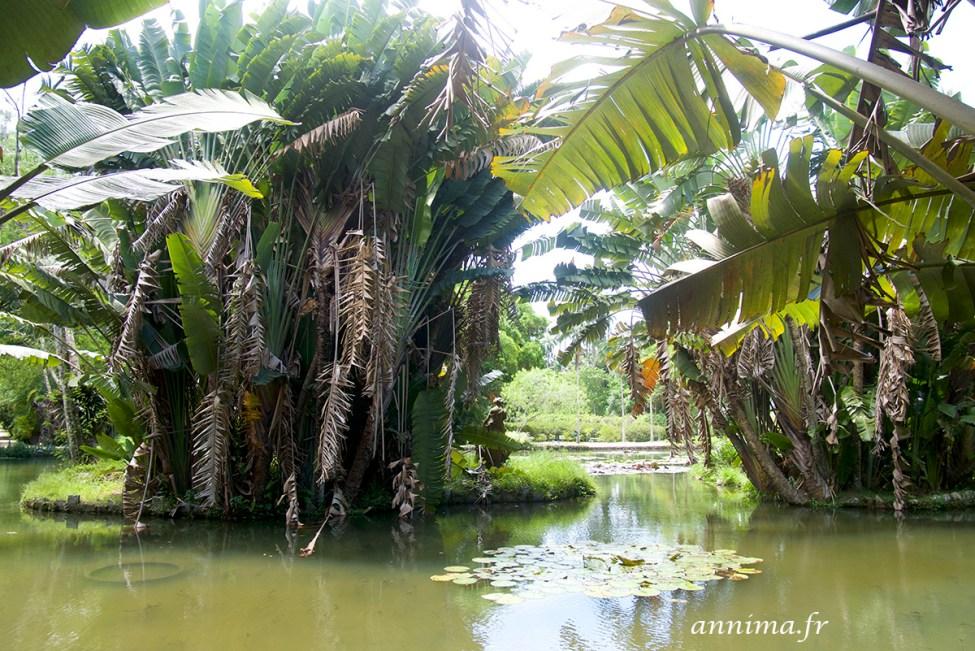 jardin-botanique-rio13