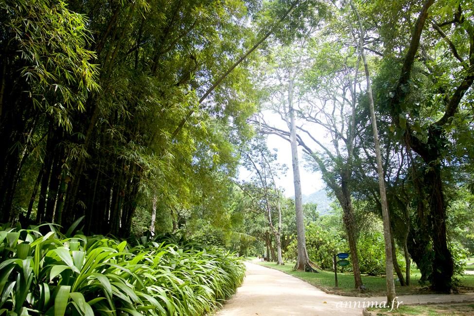 jardin-botanique-rio14