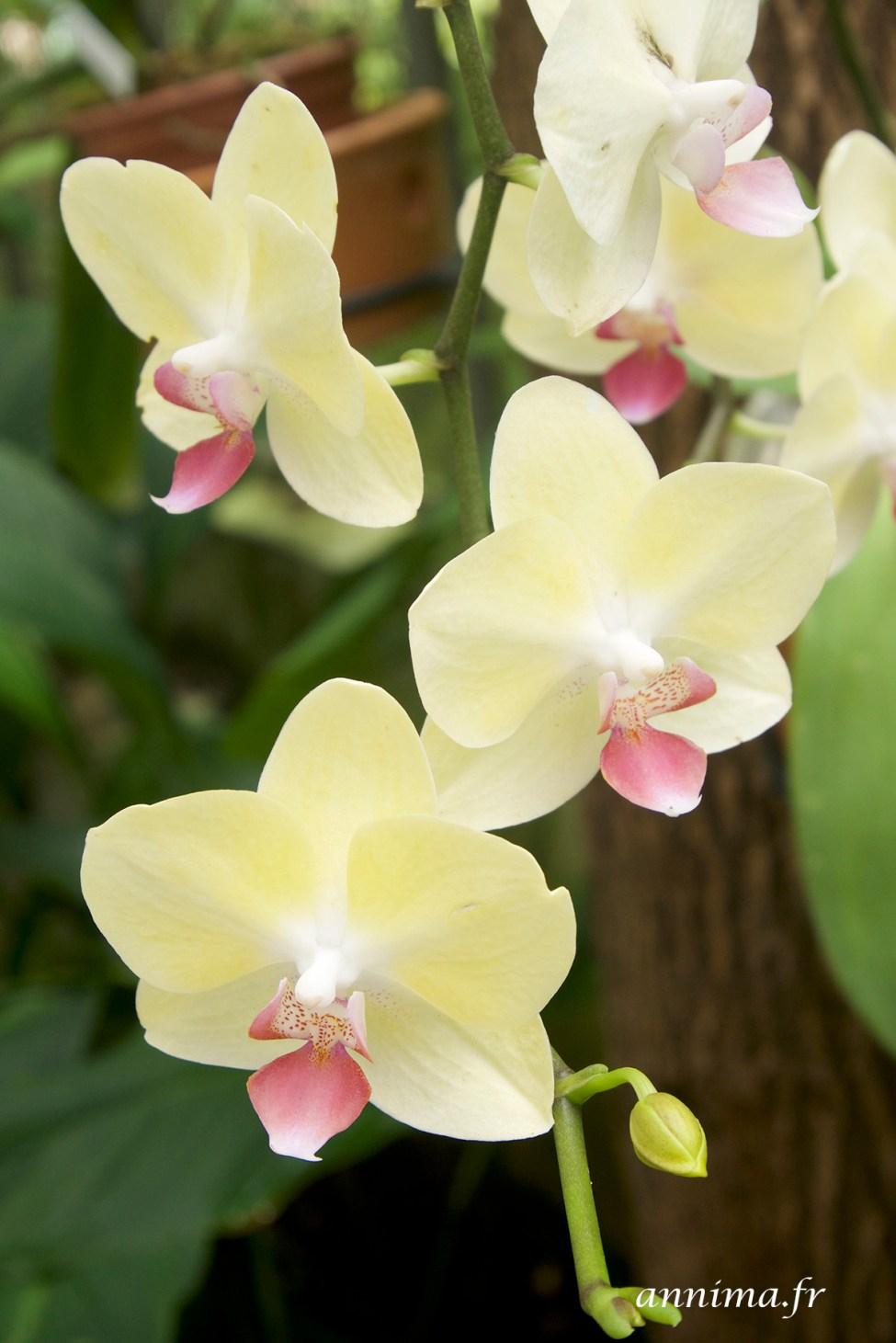 jardin-botanique-rio32