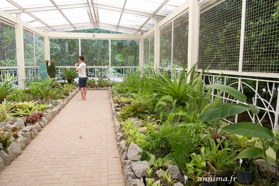 jardin-botanique-rio37