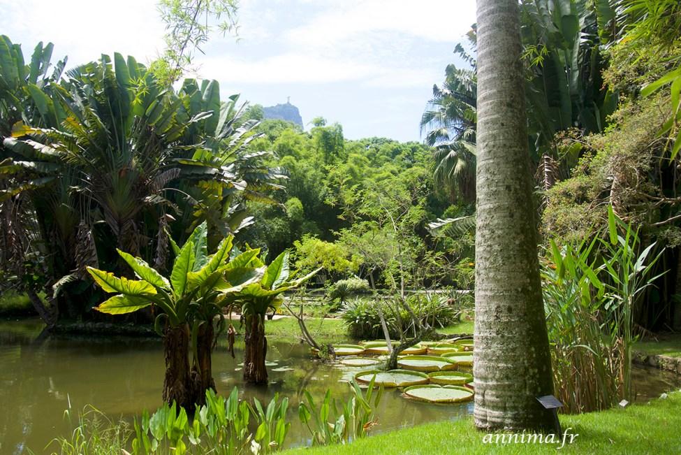 jardin-botanique-rio43