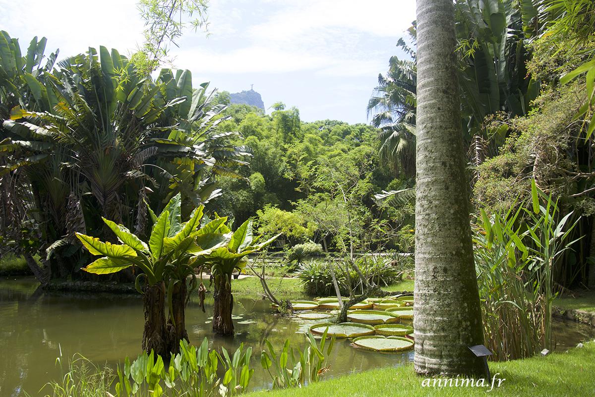 Un peu de fra cheur au jardin botanique de rio for Jardin 43 rio gallegos