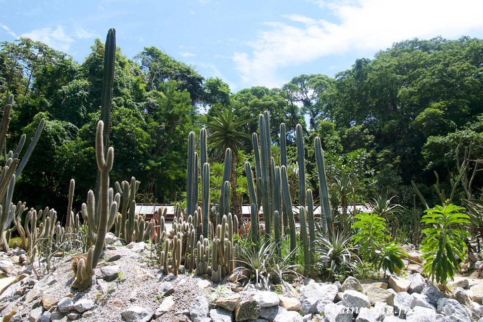 jardin-botanique-rio5