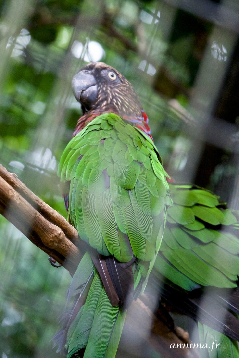 parc-des-oiseaux5