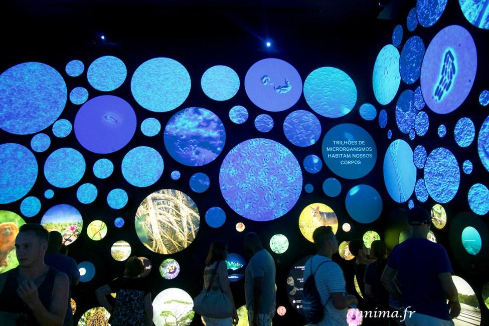museu-do-amanha12