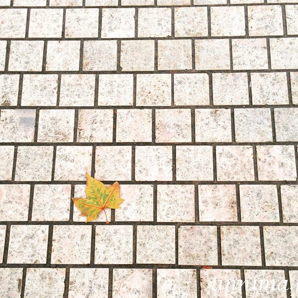 novembre-iphone-annima-15