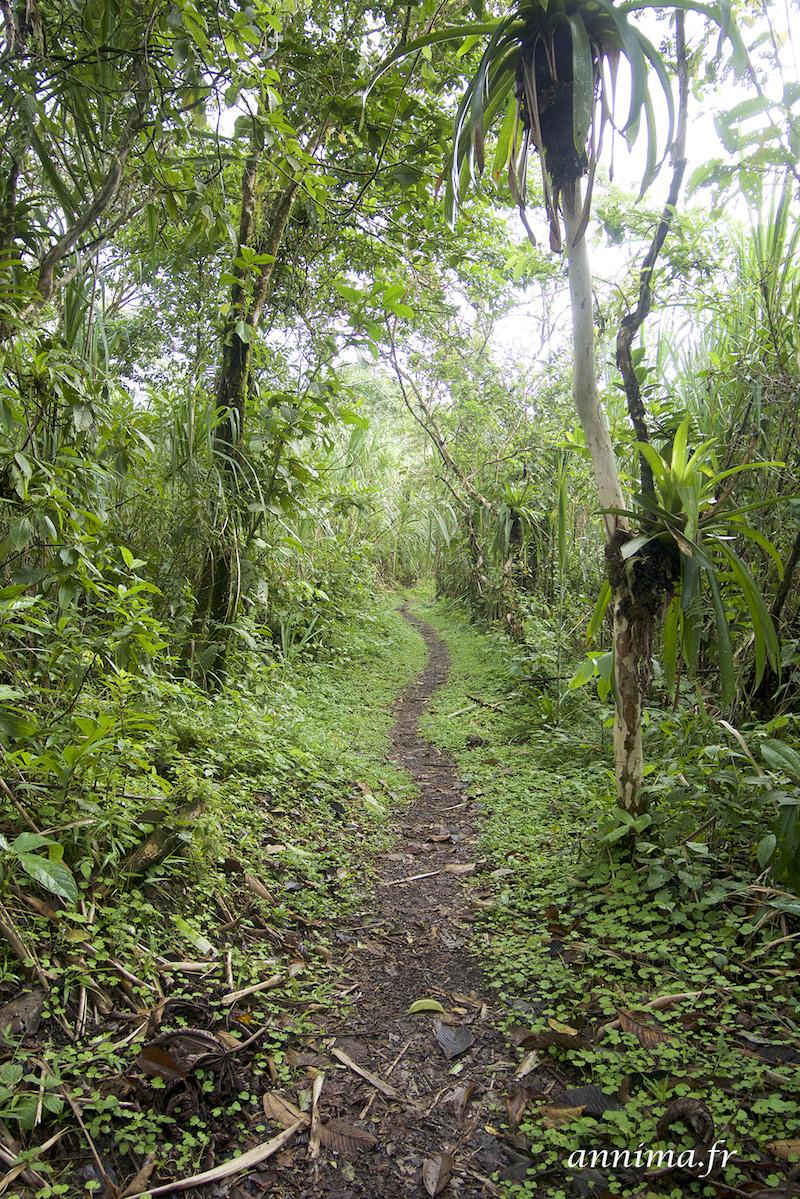Le tamandua et les urubus noirs du volcan Arenal.