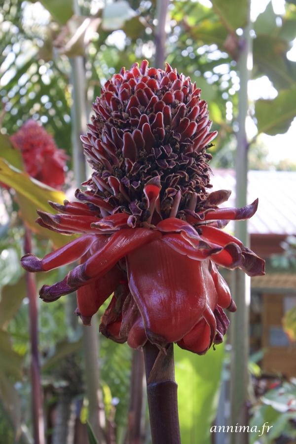 Garden Grecia B&B Costa Rica
