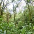 Costa Rica - cloud forest