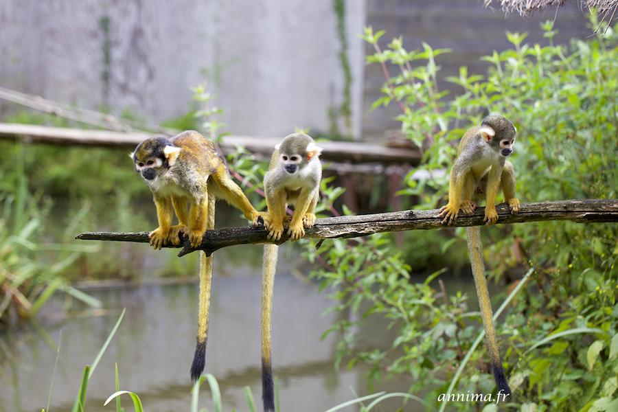 Vallee-des-singes-romagne
