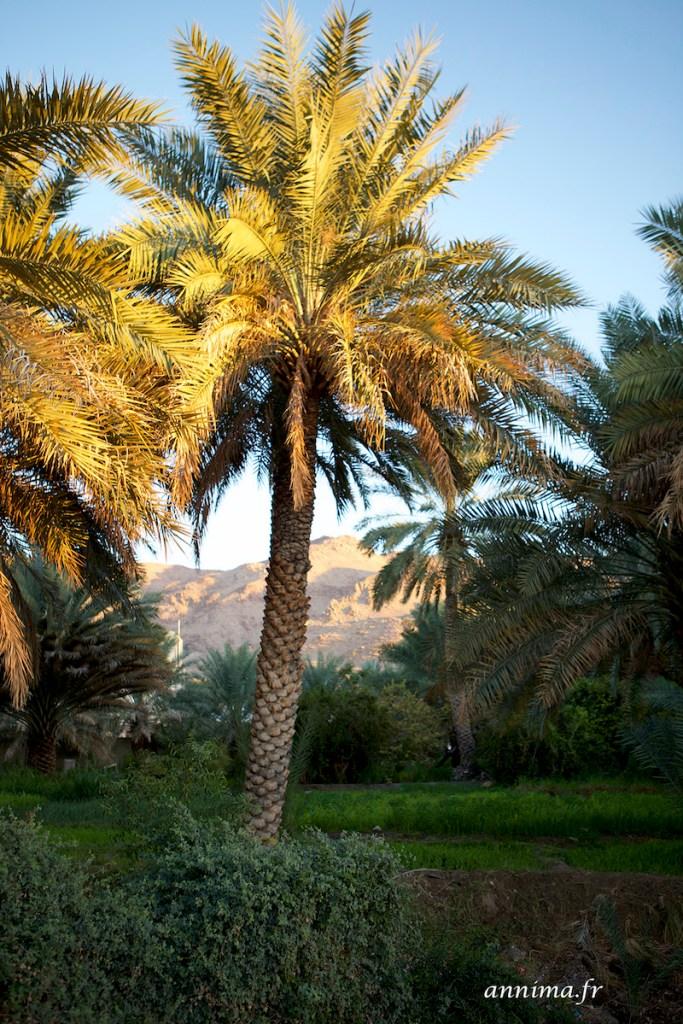 Falaj Daris Oman