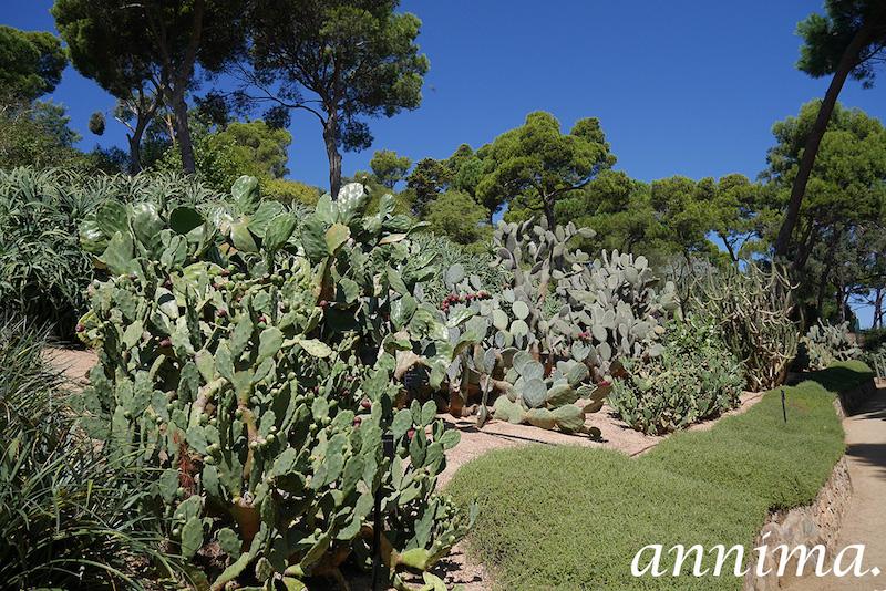 Les cactus au Jardin Botanique du Cap Roig.