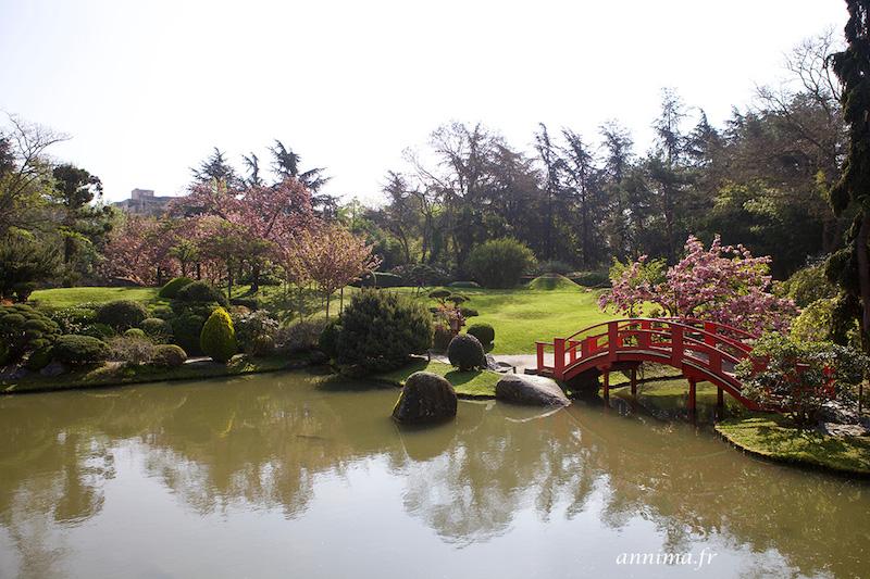 Fêter les cerisiers en fleur au Jardin Japonais