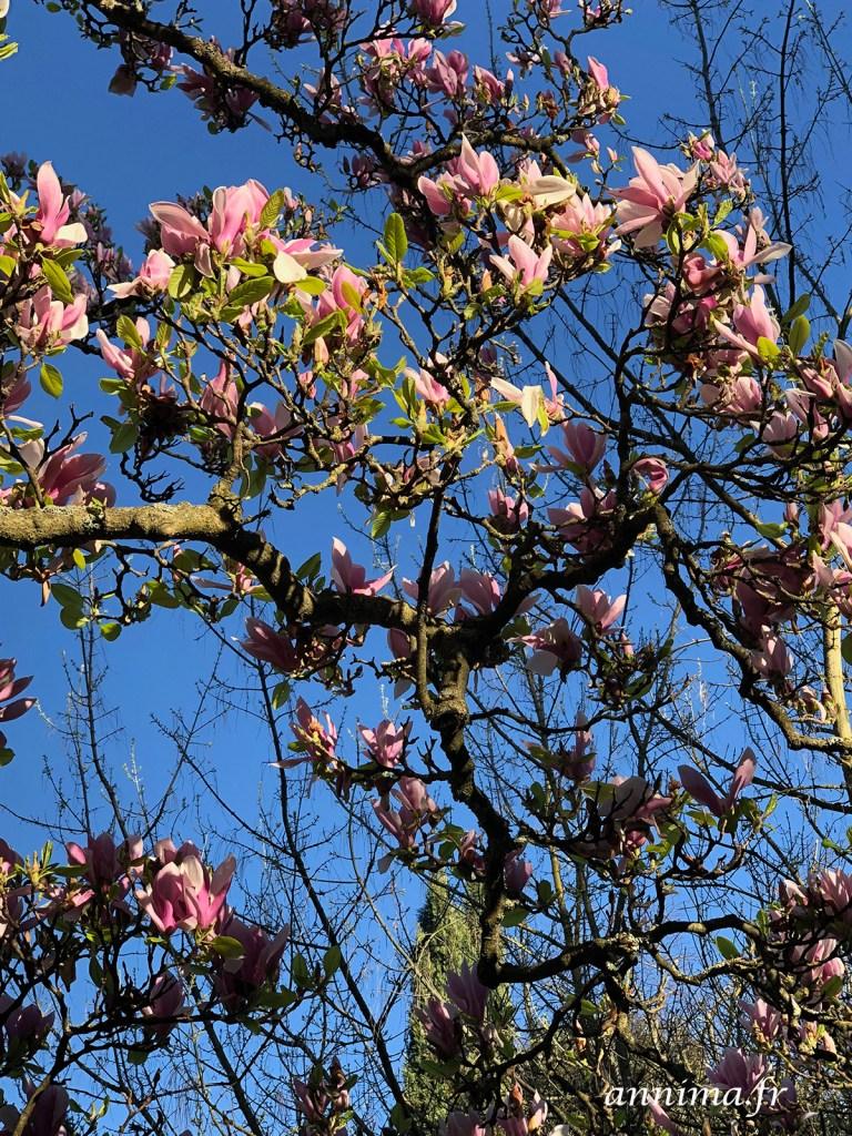 Iphoneography de mars 2019, le timide printemps