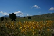 Colourful fields of Anatolia