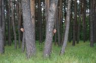 Hiding in the forest