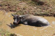 Taking a refreshing dip