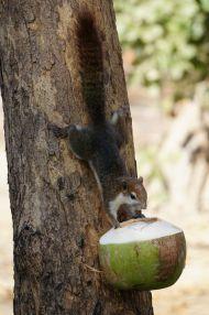 Hungry squirrels, Ayutthaya
