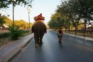Not every day you get to ride with an elephant