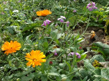 Calendula and radish flowers