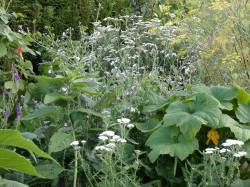 Edge of polyculture 2, August 2016