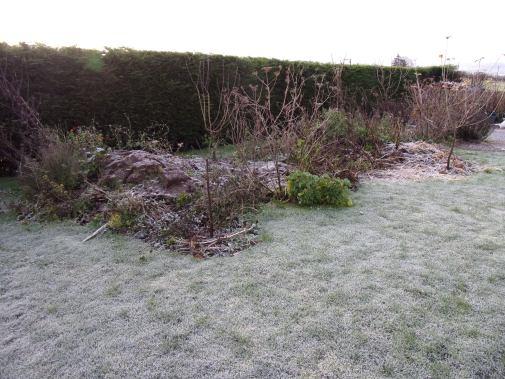 Perennial polyculture beds still frosty