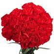 buy red carnations
