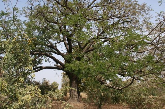 Mali-a 2011 001 (308)