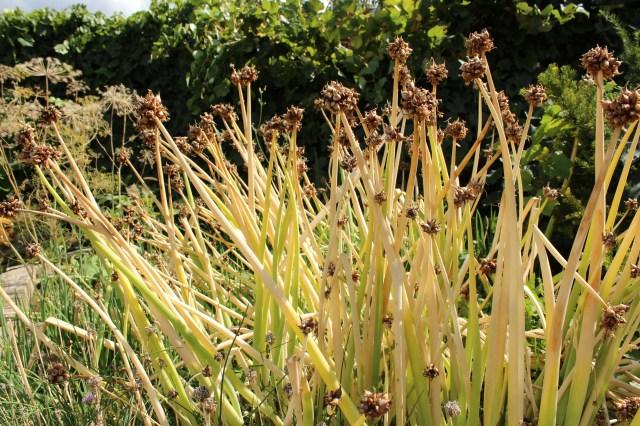 Garden  (2)