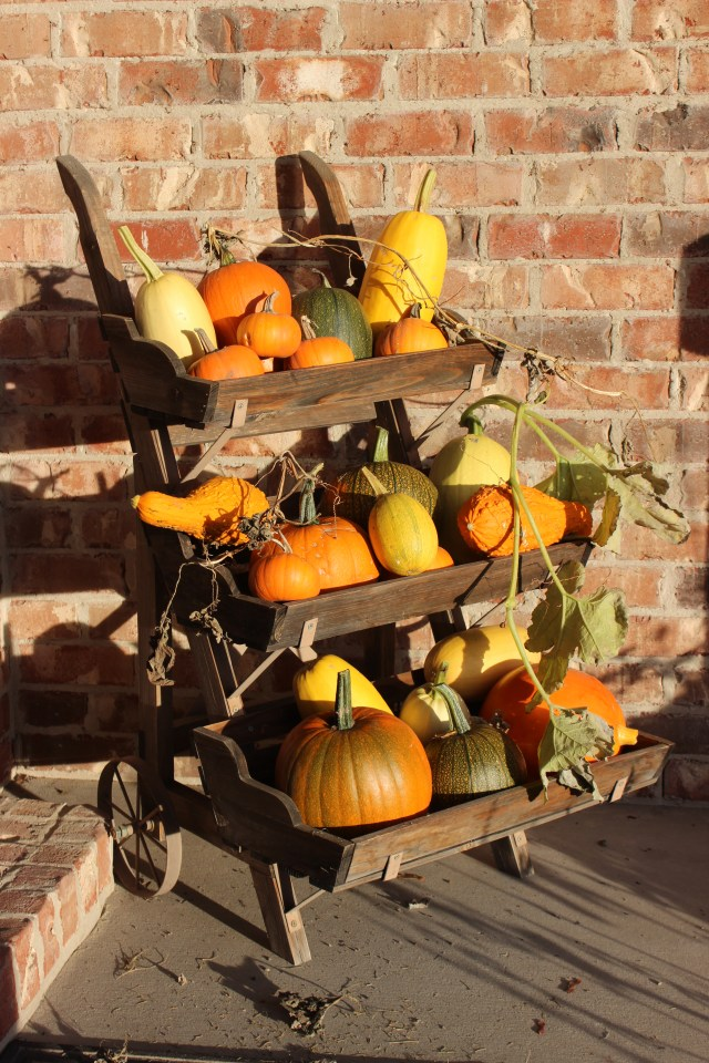 2010-10-17 Pumpkins from Garden (1)