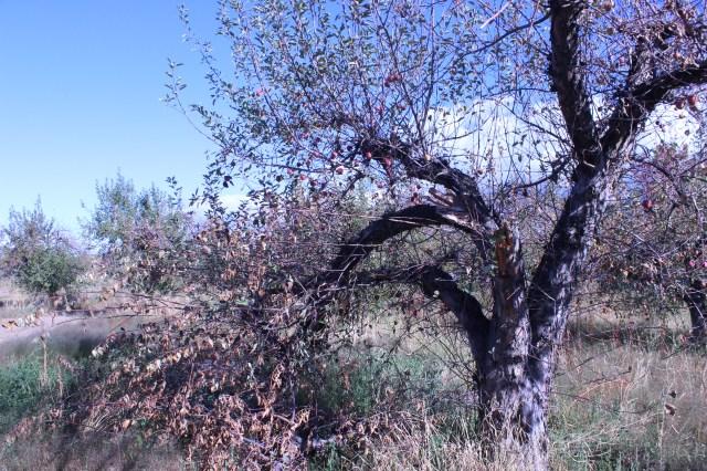 2014-10-27 Farley Orchard Murdered (1)