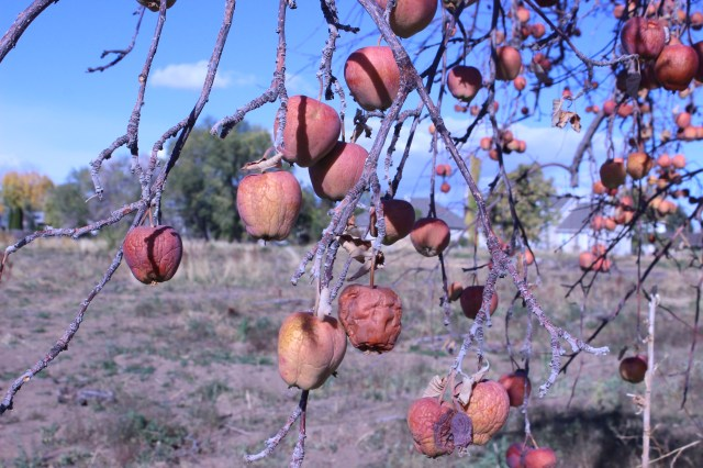 2014-10-27 Farley Orchard Murdered (18)