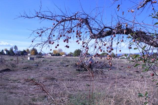 2014-10-27 Farley Orchard Murdered (2)