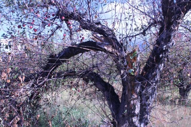2014-10-27 Farley Orchard Murdered (22)