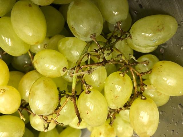 2019-10-4 Grape Ettiquite (3)