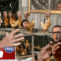CHICKEN COUP MUST ADMIT DEFEAT [The Occupied Sun]