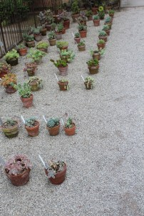 Botanical garden, ordening Padua, Ann Dijkstra, 2014