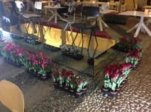 Inner garden with tulips