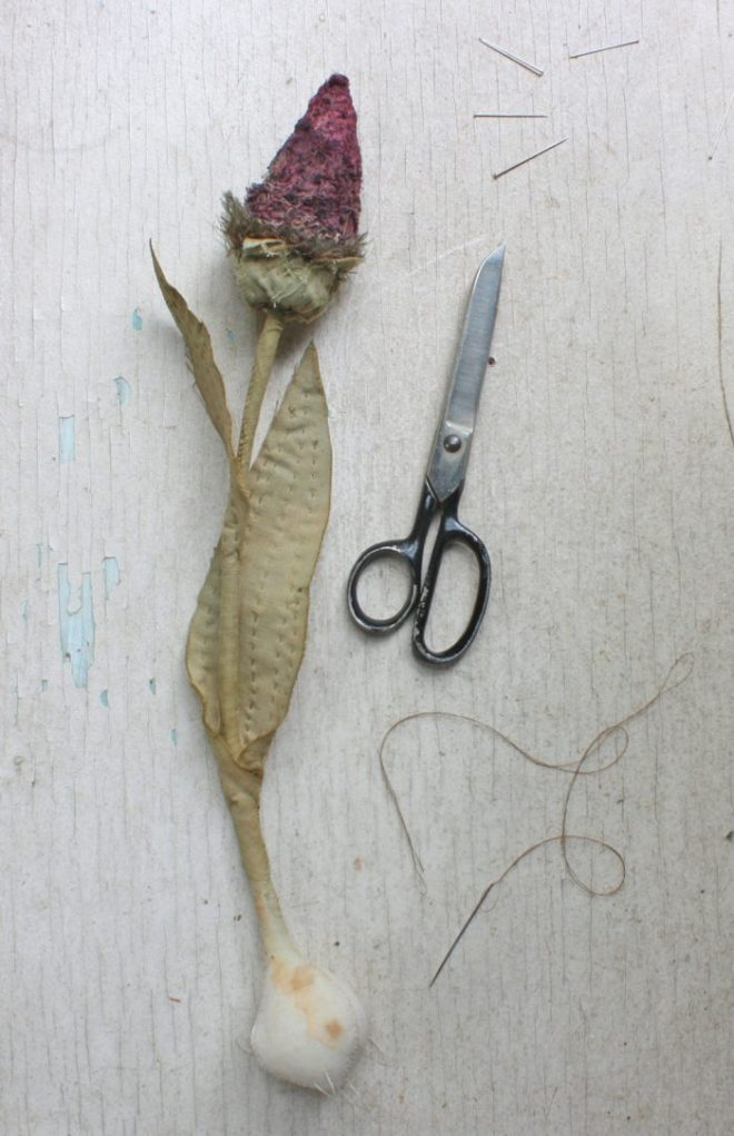 royal cone flower