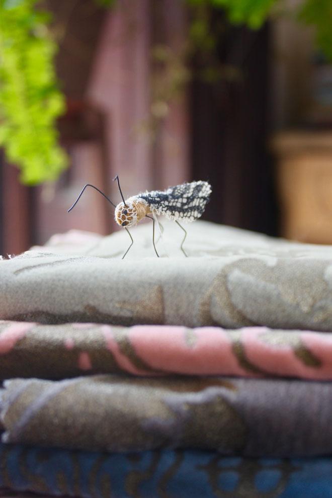 a tiny handmade fly inspecting fortuny velvet