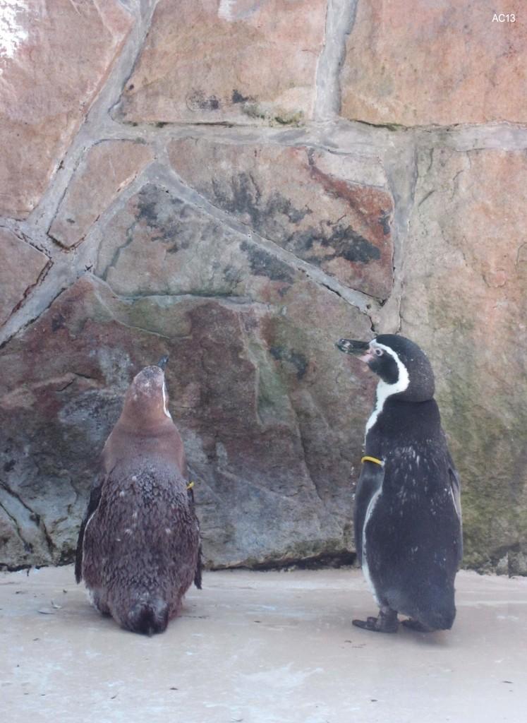 Klagemauer der Pinguine