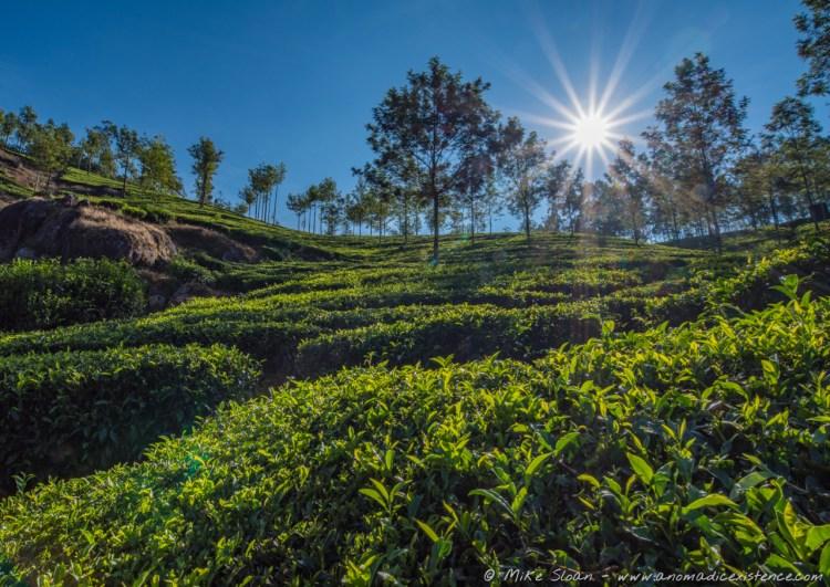 Trekking amongst Munnar's tea plantations is a must do!