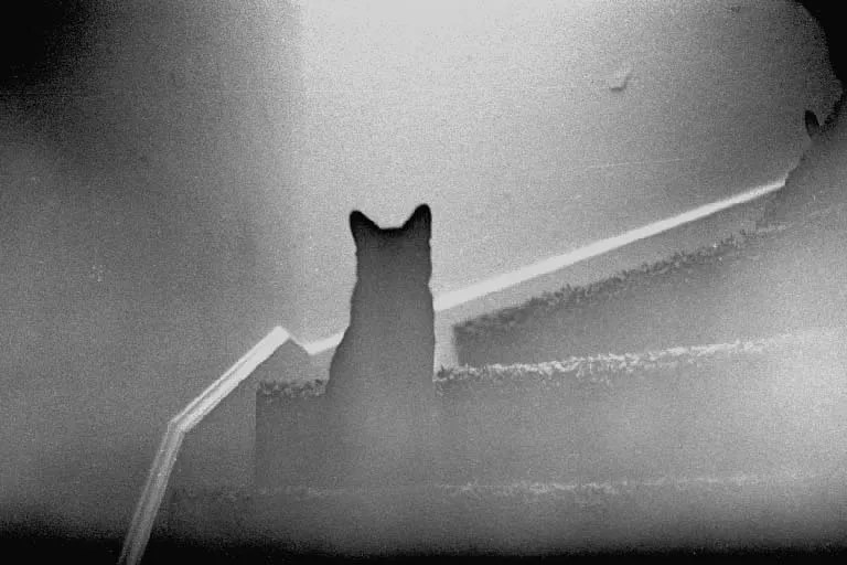 Chat fantôme