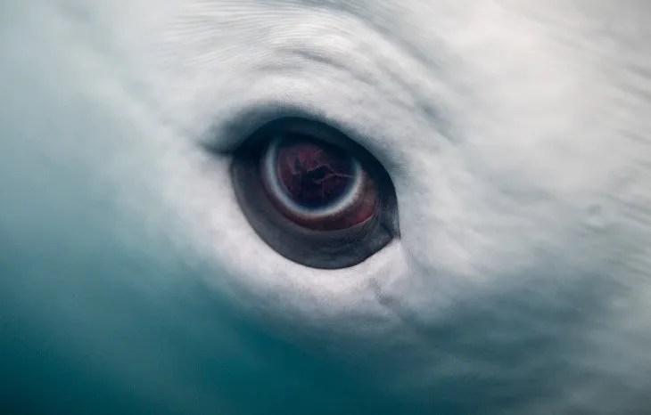 Oeil de dauphin