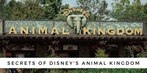 Secrets of Disney's Animal Kingdom Park