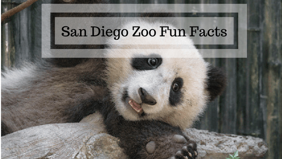 Fun Facts About The San Diego Zoo An Open Suitcase