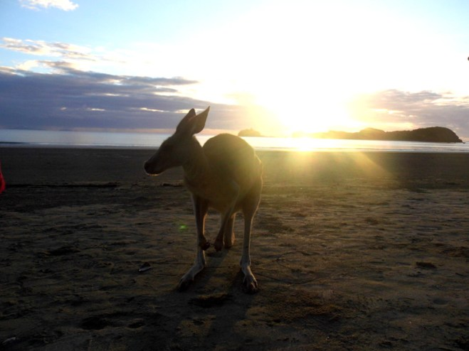 Kangaroo beach sunrise, Cape Hillsborough, Mackay, Australia