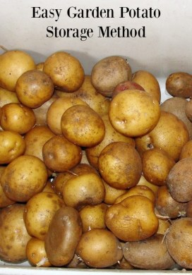 How to Have Potatoes From Your Garden – In February!